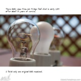 I Collect Light Bulbs 30